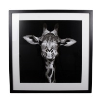 Tavla Giraff