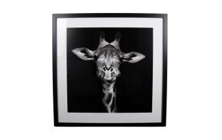Tavla Giraff -