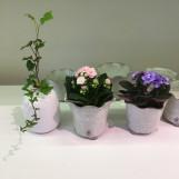 Minikrukor succulent