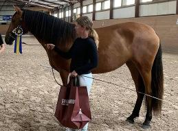 HASHASHIN - Reserv Champion gångarter, unghästar 2- 3 år