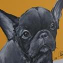 Matilda Skoglund - Dog Frenchie