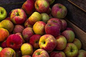 Äpplen 15 kr/kg -