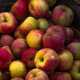 Äpplen 15 kr/kg