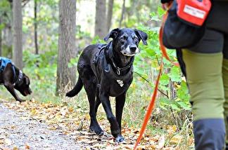 Koppel & Hundmöteskurs Heldag -