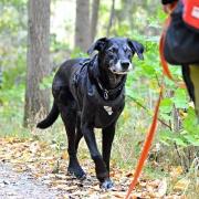 Koppel & Hundmöteskurs Heldag