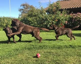 Föreläsning - Hundspråk - Hundspråk 1 biljett