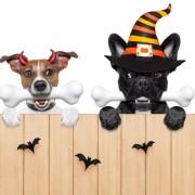 HalloweenSPECIAL - Träningstävling - Dubbelt upp