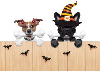 HalloweenSPECIAL - Träningstävling - Dubbelt upp - 14:40  Michaela