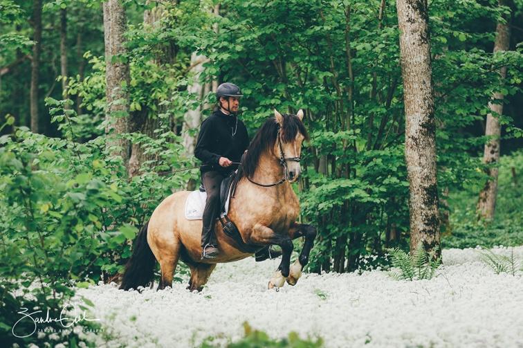 Academic Art of Riding | Akademiskridkonst