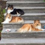 Ella, Tessa och Lycka