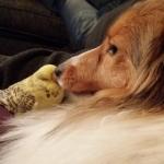 Lapplandia's Faith Hope And Love  Tessa myser i soffan med sin vän.