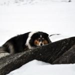 Saga sover på en sten i Mavas