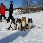 Alice och våra hundar Nasaloppet