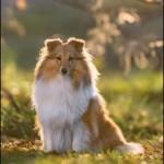 """Lapplandia's Eevee""""Doris"""" 10 månader njuter av hösten"""