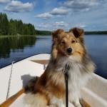 Lapplandia's Candy Corn Adele 10 mån åker båt
