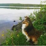Lapplandia's Truly Brave Boss kikar ut över vattnet