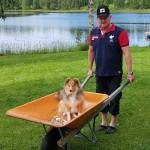 Lapplandia's Candy Corn Adele hjälper husse med trädgårdsarbetet