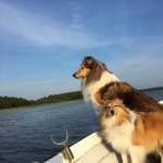 Lapplandia's Loreen-On-Top Tindra och hennes syster Lapplandia's Vulpix Nea åker båt