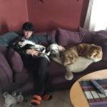 Anna har fulla soffan med hundar.