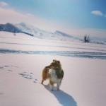 Lapplandia's Truly Brave