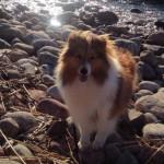 Lapplandia's Love And Peace Lycka 10 månader