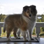 Kiwi 16 veckor