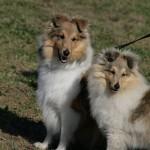 Systrarna Stella och Mira