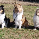 Mamma Alice,Stella och Mira