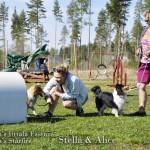 Lapplandi_s Starfire _ Iittala Essence 2