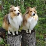 Roliga skogspromenader