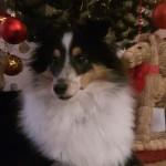 Viggo 6 månader hälsar alla en God Jul