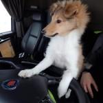 Ulf är en riktig chaufför som hjälper husse Magnus