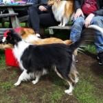 Gustav, Doris och Matilda