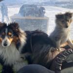 Assar och Sila åker skoterpulka