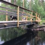 Åh vad vi springer över bron
