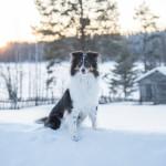 "Julhälsning från RLDN Lapplandia's Rainbow Bridge ""Trolla"""
