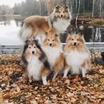 "Lapplandia's Lucky Paw ""Tyra"" längst bak med sina kompisar"