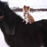 "Lapplandia's Lucky Clover ""Ulf""rider"
