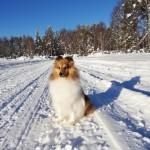 """Lapplandia's Iittala Vitriini """"Mira"""" 16 månader"""