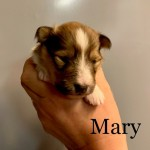 Mary/ Maj-Lis 2 v