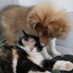 "Lapplandia's Snowflake ""Maj-Lis""och katten  Rut"