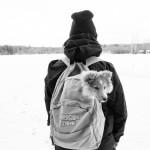 "Lapplandia's Snowflake ""Maj-Lis"" 10 v trivs bra i sin ryggsäck"