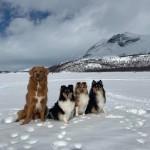 Flax, Alice, Stella och Trix