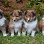 Ivar, Knut, Lilly och Alma - kopia