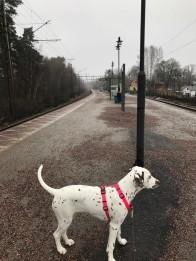 Buffy på Kolmårdens station