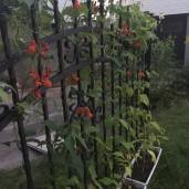staket (1)