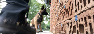 Indication for scent detection dogs - Online course