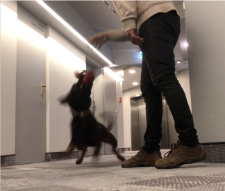 Play as reward for working dogs - Online course