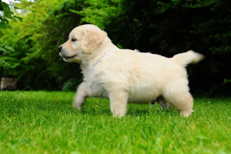 Härligt att springa på gräsmattan