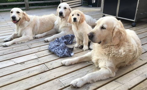 Holley, Swish, Glen och Noa. Augusti 2018